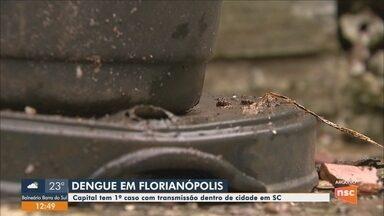 Florianópolis registra 1º caso autóctone de dengue de 2019, informa prefeitura - Florianópolis registra 1º caso autóctone de dengue de 2019, informa prefeitura