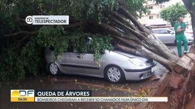 Árvore cai na Via S3 - Foi entre o Setor Comercial e o Setor de Autarquias Norte. A árvore ficou no meio da pista, interditando o trânsito.