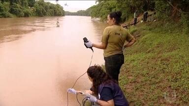Chuva acelera descolamento de resíduos de minério no Rio Paraopeba - Segundo a Fundação SOS Mata Atlântica, 153 quilômetros do rio já foram atingidos pelos resíduos. Água do rio está imprópria para uso e consumo dos animais.