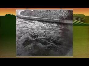Telespectadora de Espinosa envia vídeo que mostra água em árvore mesmo sem chover - Especialista tira dúvidas da telespectadora.