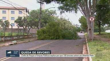 Chefe de Praças e Parques Públicos explica por que 100 árvores caíram em Ribeirão Preto - O temporal que atingiu a cidade no último domingo (3) derrubou muitas árvores.