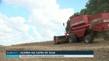 Safra da soja tem quebra na produção no Paraná - No sudoeste do estado muitas famílias ainda seguem na colheita.