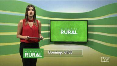 Confira os destaques do Mirante Rural - Veja os destaques do Mirante Rural que será apresentado na manhã de domingo (10) por Jéssica Melo.