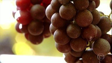 Safra de uva será menor na serra gaúcha - As parreiras sentiram os efeitos de uma chuva de granizo que atingiu a região no ano passado. Com isso, os produtores devem colher 20% a menos que na última safra.