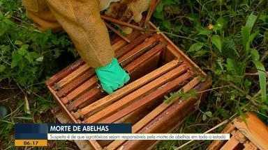 Mais de 6 mil colmeias foram perdidas no RS nos últimos meses, estima associação - Polícia suspeita que mortandade esteja ligada ao uso de agrotóxicos nas lavouras.