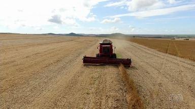 Falta de chuva prejudica produção de soja, em Goiás - Queda na colheita chega em média a 20%, cerca de R$ 2 bilhões.