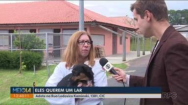 Animais estão disponíveis para adoção em Curitiba - Adote na Rua Lodovico Kaminski, 1381, CIC.