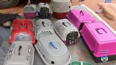Transferência de cães de canil interditado continua em Piedade - Continua a transferência de cães que ainda estão no canil interditado em Piedade (SP).