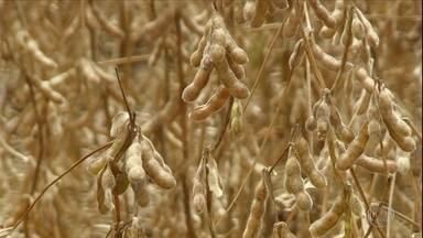 Safra de soja do Brasil deve ser menor por conta da seca - PR é estado que mais sofreu. Estimativa da Conab é de que colheita diminua 3,3% em relação ao ciclo.