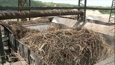 Setor de cana se recupera em AL depois de registrar pior safra da história devido à seca - Estado deve moer cerca de 16 milhões de toneladas nesta safra, 16% mais que na anterior.