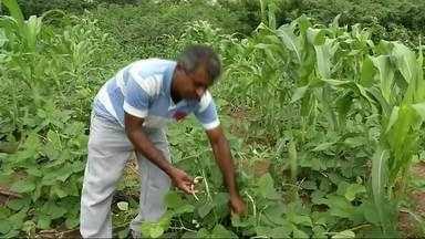 Agricultores de Sobral reclamam da demora na entrega de sementes - Confira mais notícias em g1.com.br/ce