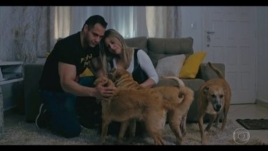'Vida Animal - Segunda Chance': casal já resgatou mais de 500 animais de rua - Julyana Valário é fonoaudióloga, mas também resgata animais junto com o marido Beto Visconti. O casal já salvou mais de 500 animais de rua.