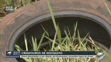 Pneus descartados a céu aberto acumulam água da chuva em Araraquara - Cidade enfrenta epidemia de dengue e local serve para o mosquito Aedes aegypti se reproduzir.