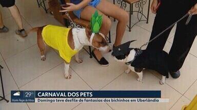 'Carna Pet' reúne vários animais de estimação e donos fantasiados em Uberlândia - Festa foi promovida pelo segundo ano consecutivo por um pet shop da cidade.