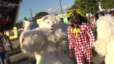 Tem urso no Carnaval da Paraíba! - Fantasia do animal é uma tradição dos foliões paraibanos