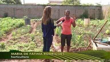 Horticultura garante renda de famílias de Montes Claros - Projeto da Associação de Moradores Recanto das Hortaliças é realizado há 17 anos, no bairro Santos Reis, em Montes Claros.