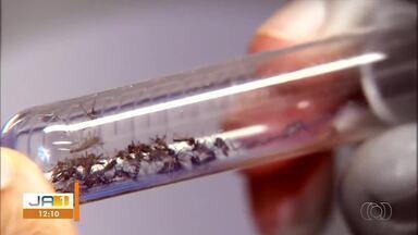 Onze mortes são investigadas por suspeita de dengue no Tocantins - Onze mortes são investigadas por suspeita de dengue no Tocantins