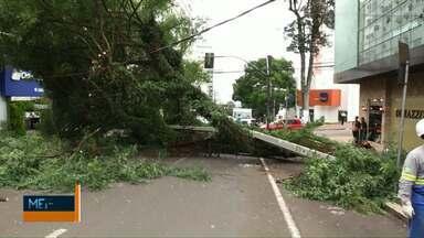 Árvore cai e fecha rua em Cascavel - Comércio na região do Centro ficou sem energia elétrica.