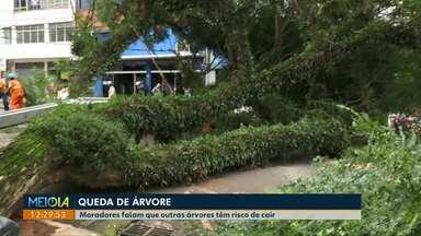Risco de queda de árvores gera preocupação em Cascavel - População está em alerta depois que árvore gigante caiu no Centro.