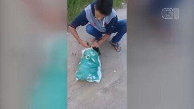 Cachorro é salvo após ser abandonado dentro de saco em Peruíbe, SP - Animal não conseguia respirar e estava assustado no momento do resgate. Flagrante foi no bairro Caraminguava.