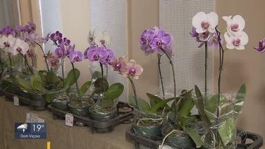 Exposição de orquídeas recebe mais de 200 exemplares em Varginha, MG - Exposição de orquídeas recebe mais de 200 exemplares em Varginha, MG
