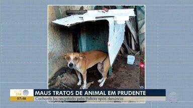 CCZ faz verificações sobre cão resgatado de maus-tratos, em Presidente Prudente - Animal estava em um barracão de uma oficina mecânica no Jardim Bela Dária.