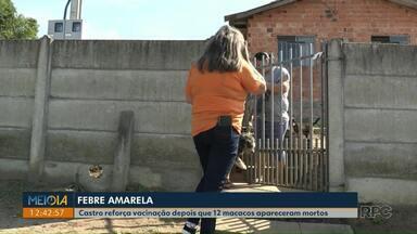 Vacinação contra a Febre Amarela é reforçada em Castro depois de morte de macacos - 12 animais foram encontrados mortos. Material foi coletado para análise.