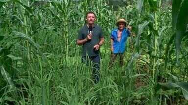 Período chuvoso renova a esperança de agricultores em Valença - Período chuvoso renova a esperança de agricultores em Valença