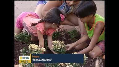 Moradores se reúnem para arborizar praça em Montes Claros - A ação foi realizada neste domingo (31).
