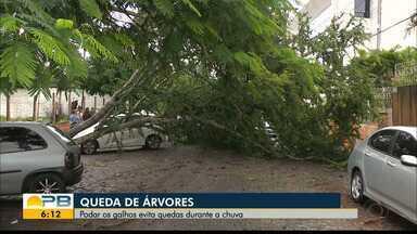 Veja como prevenir quedas de árvores durante chuvas - Representante da Semam, na Paraíba, dá dicas.