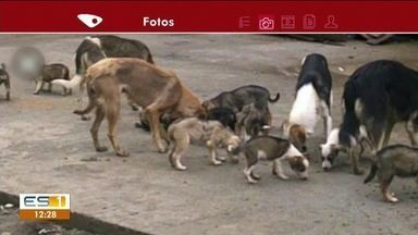 Moradores de Ibatiba reclamam de número de cachorros soltos em rua, no Sul do ES - Em algumas ruas, ficam até 10 cães juntos. A prefeitura disse que já procurou uma solução para o problema, mas muitos cachorros nas ruas tem dono.