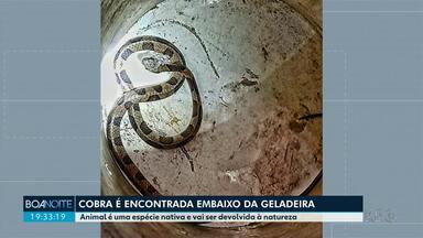 Espécie de cobra nativa é encontrada embaixo de geladeira em bairro de Maringá - Animal deve ser devolvido à natureza