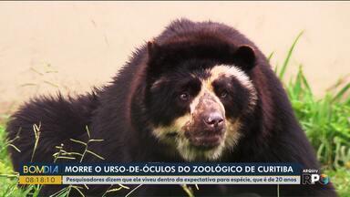 Morre o urso-de-óculos do zoológico de Curitiba - Andy tinha 14 anos e de acordo com pesquisadores ele viveu dentro da expectativa pra espécie que é de 20 anos