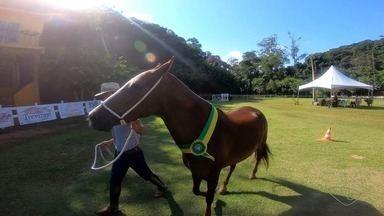 Exposição de cavalos tem mais 200 Mangalarga Marchador, ES - A programação é em Domingos Martins, com competições e leilão.