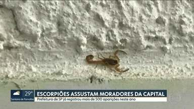 Escorpiões assustam moradores da capital - Prefeitura de SP já registrou mais de 500 aparições neste ano