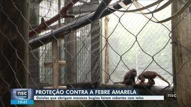 Gaiolas de macacos são cobertas por telas para evitar transmissão de febre amarela - Gaiolas de macacos são cobertas por telas para evitar transmissão de febre amarela em Indaial