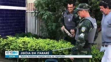 Cobra é capturada em árvore em bairro de Vitória - Cobra tem cerca de 1,20 m de comprimento e é um animal jovem. Ela foi capturada para ser devolvida ao seu habitat natural.