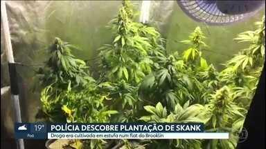 Polícia descobre plantação de skank - Droga era cultivada em estufa num flat no Brooklin