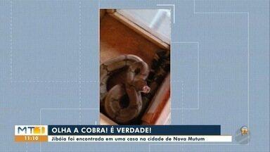 Jiboia foi encontrada em uma casa na cidade de Nova Mutum - Jiboia foi encontrada em uma casa na cidade de Nova Mutum.
