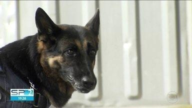 Cães farejadores ajudam no combate ao tráfico - O faro apurado dos animais permite que os agentes encontrem drogas escondidas.