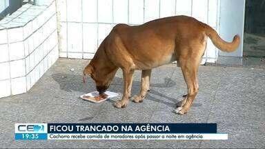 Cachorro fica preso dentro de banco - Moradores se mobilizaram pra ajudar o animal