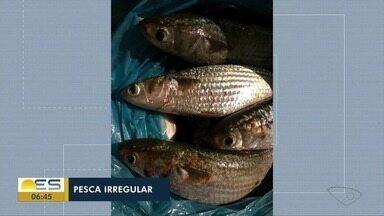Trinta e cinco quilos de peixe foram apreendidos pela Polícia Ambiental no ES - Pesca irregular aconteceu em Vitória.