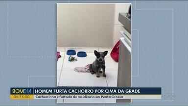 Dois homens furtam cachorro por cima da grade de uma casa em Ponta Grossa - O furto só foi notado pelos donos no dia seguinte que registraram a ocorrência na polícia.