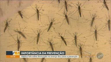 Entenda a evolução dos casos de dengue em Campinas - Cidade contabiliza quase 5 mil casos da doença em 2019.