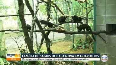 Família de saguis de casa nova em Guarulhos - O espaço no zoológico aumentou para preservar a espécie