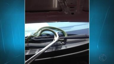 Cobra aparece em capô de carro e assusta motorista em São João del Rei - Corpo de Bombeiros foi acionado e capturou a serpente. Ninguém ficou ferido.