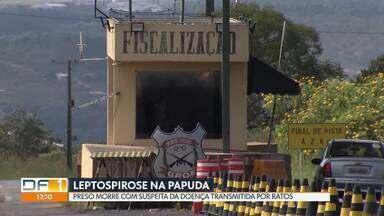 Preso da Papuda morre com suspeita de leptospirose - O preso começou a vomitar depois que teve contato com água da chuva e roedores.