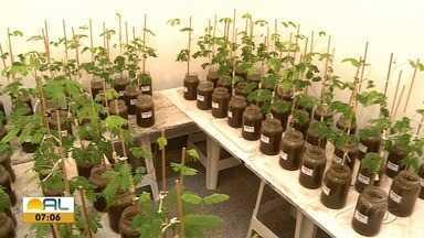 Quadro Meio ambiente mostra espaço de recuperação de áreas de preservação ambiental - Trabalho vem sendo desenvolvido pela Ufal