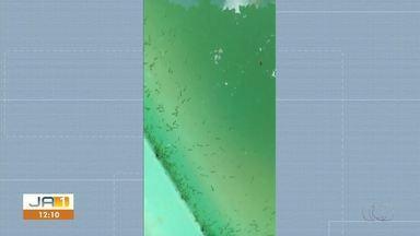 Vídeo flagra piscina cheia de larvas do mosquito da dengue em casa na 110 Norte - Vídeo flagra piscina cheia de larvas do mosquito da dengue em casa na 110 Norte