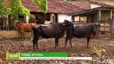 Campanha de vacinação contra febre aftosa é realizada em Quatis - Vacina vai até o dia 31 de maio. Devem ser vacinados bois e búfalos.